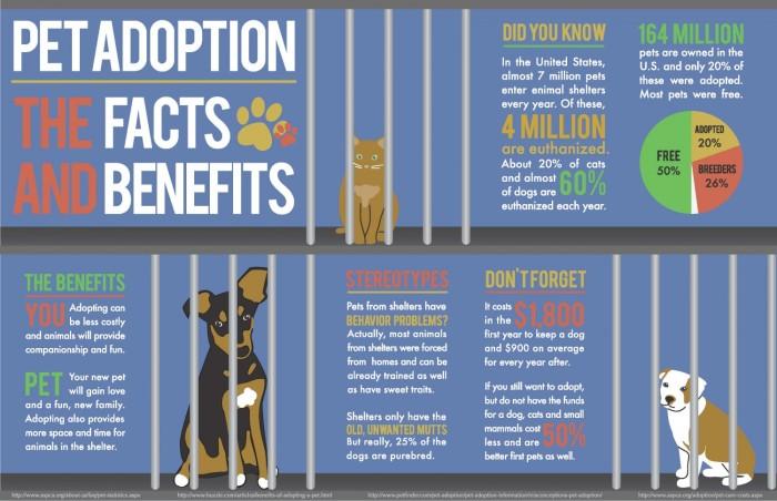 adoptionfacts