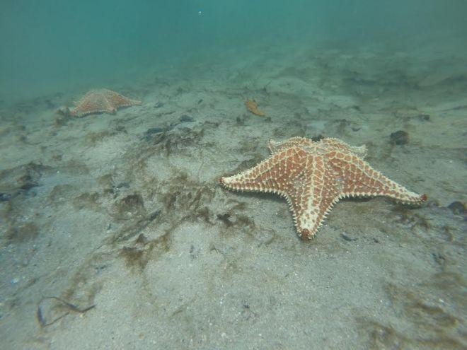 starfishbeach2
